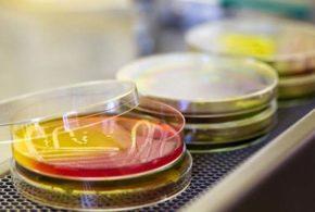 Descubra a nova tendência cosmética: microbioma